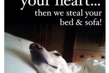 Lurcher Lovers! / All things Lurcher