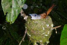 Aves endémicas de São Tomé e Príncipe