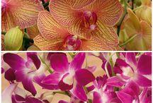 Orchids / Indoor Plants