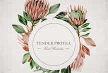Protea and gyp