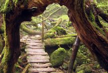Doors & Paths  / I love the look of an enchanting doorway or a path that leads to a potential magical space