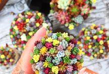 Çiçekler   Flowers