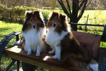 SHELTIES / by Simple Solutions Organizing & More
