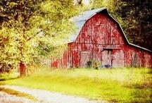 Down on the Farm / by Lynette Bondietti