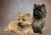 cairn terriers / by Claire Herman