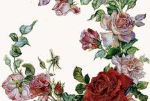 kw-róże