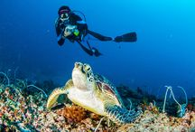 Popular Diving Destinations in Malaysia