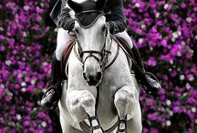 horse♥