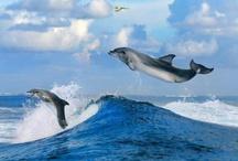 Surfing the Ocean