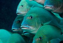 Fishies and the underwater world!