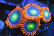 Corales y medusas
