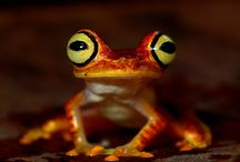 Frogs / by Jessica James