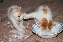 υπέροχες γατούλες