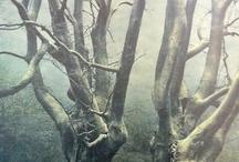 Suggestive / Arbusti e Caligine