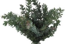 Greens, Foliage / All of the Foliage you see are sold at Stevens and Son Wholesale Florist in Arvada, Colorado. They delivery locally and out of state within the United States Territory,