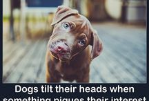 Doggie facts