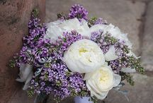 Lilac Pion