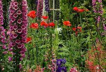 Garden ideas / Garden revamp