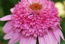 ¸¸.✿ GREEN THUMB ✿⊱╮ / ✿ Gardening Tips, Landscape Ideas, Flowers and Bird Feeding ✿ / by ╰✿⊰ Karen Linn ⊱✿╮