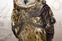 Owl / a little bit about birds ...