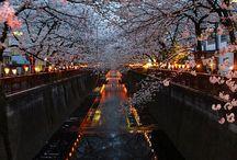 gitmek istediğim yerler / Cherry Blossom River, Kyoto, Japan