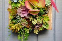 Flower and plant arrangements