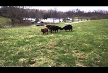 Freedom Farms Videos