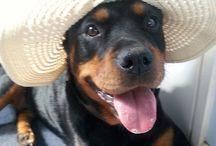 il cagnolone del mio cuore