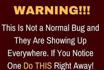 dangerous bugs!!
