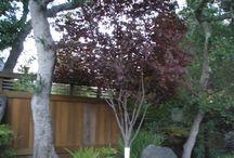 Trees in Marin / Marin Trees