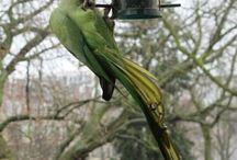 birds / Photo's I took of birds in my neighboorhood