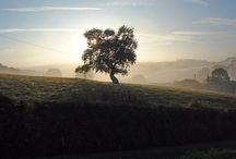 Scenic photos / A selection of scenic photographs at different times of the year in and around Higher Bowden Holiday Cottages / by Higher Bowden Holiday Cottages