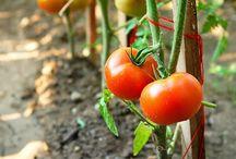 Veg and Fruit garden
