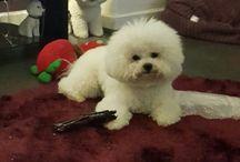 Shailo 3ro / My dog is crazy