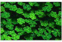 All Irish / by Sue Varisco