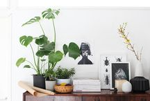 Plants Lover