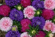 virágom-virágom