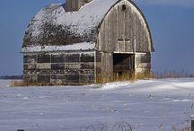 Wish I Were A Barn Owl / by Susan Carr