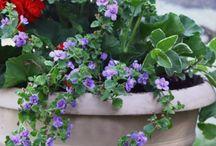 piante e composizioni