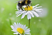 Bee aware / Environment alert