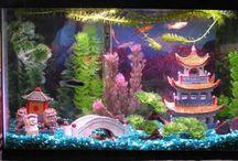 Aquarium / Acuarios y relacionados