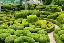 Klippta gröna trädgårdar