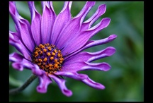 Purple / by Teresa Russell
