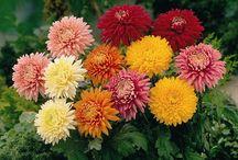 Jaiho Exports Flowers