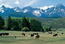 Buffalo Girl's Ranch / by Barbie Anderson