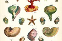 Shells, I love shells.