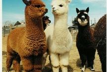 Is you mama a llama? / by Beth