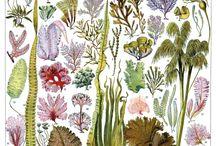 Algues & plantes encyclopédiques