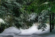 Winter. Green