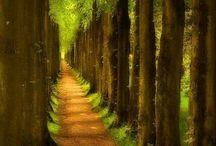 Miejsca, w których chciałoby się być. / Podróżowanie w poszukiwaniu ulotnego szumu drzew, blasku słońca o wschodzie....